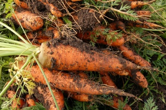 Biologiczna ochrona warzyw